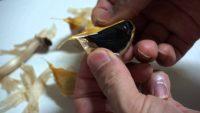 cara membuat bawang hitam dengan magic com