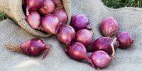 manfaat bawang merah untuk lelaki