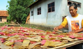 peluang usaha rumahan di desa