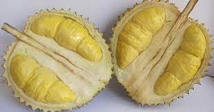 durian mimang
