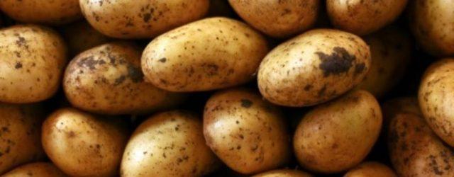 olahan kentang kekinian